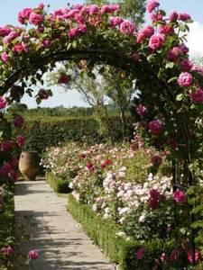 English Rose-garden-9